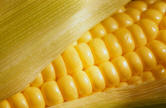 Corn & Chinese Nutrition