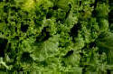 Kale & Chinese Nutrition