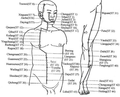 Acupuncture Com - Acupuncture Points - Stomach Meridian