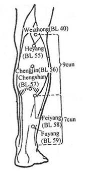 Acupuncture Com - Acupuncture Points - Urinary Bladder UB 55