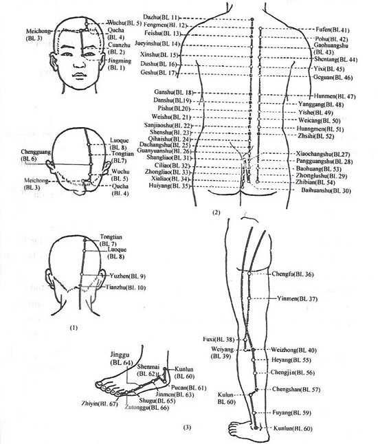 Acupuncture Com - Acupuncture Points - Urinary Bladder